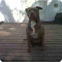 Adopt A Pet :: Jellybean - Bloomingdale, GA