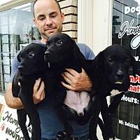 Adopt A Pet :: Wakko - Dallas, TX