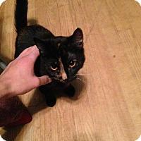 Adopt A Pet :: Matrix - Chicago, IL