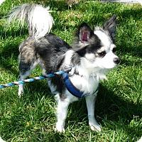 Adopt A Pet :: Dierks - Springfield, IL