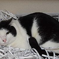 Adopt A Pet :: Ethan - Pottsville, PA
