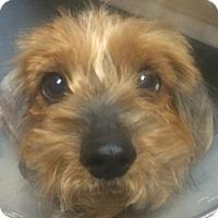Adopt A Pet :: Harrison - Oak Ridge, NJ