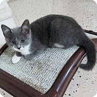 Adopt A Pet :: Patti - Boynton Beach, FL