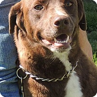 Adopt A Pet :: Bear - Joplin, MO