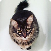 Adopt A Pet :: Neil - Brooklyn, NY