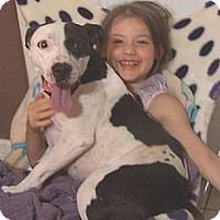 Adopt A Pet :: Oreo - Glastonbury, CT
