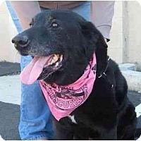 Adopt A Pet :: MURRAY - San Diego, CA