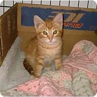 Adopt A Pet :: Taz - Warren, OH