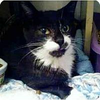 Adopt A Pet :: Sambucca - Fort Lauderdale, FL