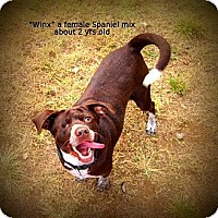 Adopt A Pet :: Winx - Gadsden, AL