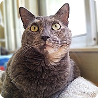 Adopt A Pet :: Louise - Mountain Center, CA