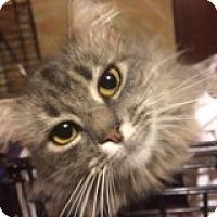Adopt A Pet :: Harlow - Delmont, PA