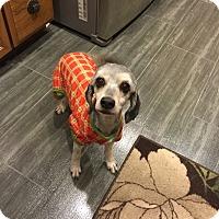 Adopt A Pet :: Mystique - Santa Ana, CA