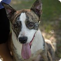 Adopt A Pet :: Brock - Daleville, AL