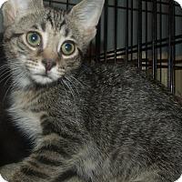 Adopt A Pet :: ARLENE - Acme, PA