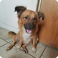 Adopt A Pet :: Nala - Ft. Lauderdale, FL