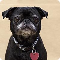Adopt A Pet :: Tequilla - Ile-Perrot, QC
