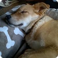 Adopt A Pet :: GIORGIO - Eastsound, WA
