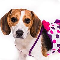 Adopt A Pet :: Bunny - New Castle, PA