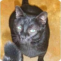 Adopt A Pet :: Big Boy - Lake Charles, LA