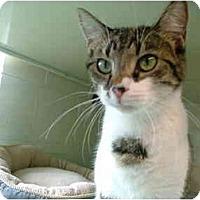 Adopt A Pet :: Calypso - Winter Haven, FL