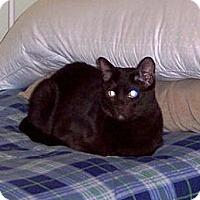 Adopt A Pet :: Tango - Summerville, SC