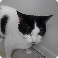 Adopt A Pet :: Thor - Sterling Hgts, MI