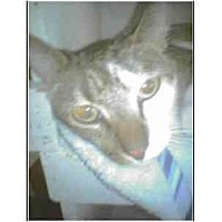 Adopt A Pet :: Curt - Owasso, OK