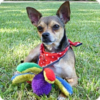 Adopt A Pet :: Turnip - Mocksville, NC