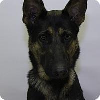 Adopt A Pet :: Nola - Mission Viejo, CA