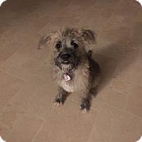 Adopt A Pet :: Bash - Laurel, MD