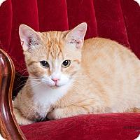 Adopt A Pet :: Dudley - Richmond, VA