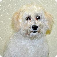 Adopt A Pet :: Eggdrop - Port Washington, NY
