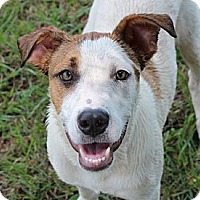 Adopt A Pet :: Daisy--Reduced fee to $200 - Foster, RI