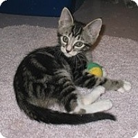 Adopt A Pet :: Mitch - Shelton, WA