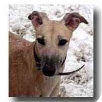 Adopt A Pet :: Kayla - Roanoke, VA