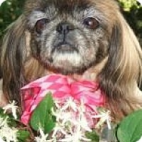 Adopt A Pet :: Roxy - Tyler, TX