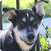 Adopt A Pet :: Brutus - Kingwood, TX