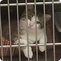 Adopt A Pet :: Tuna Fish - Ogallala, NE