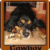 Adopt A Pet :: Cowboy - Berthierville / Sorel, QC