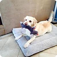 Adopt A Pet :: Oakley - Lewisville, IN