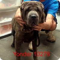 Adopt A Pet :: Yonder - Greencastle, NC