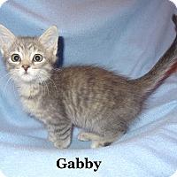 Adopt A Pet :: Gabby - Bentonville, AR