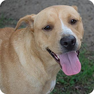 Golden Retriever/Hound (Unknown Type) Mix Dog for adoption in Apex, North Carolina - Penelope