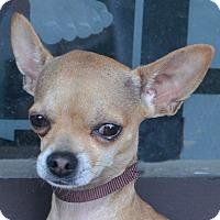 Adopt A Pet :: Gabe-Adoption pending - Bridgeton, MO