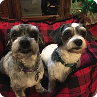 Adopt A Pet :: Moo and Bear - Sharonville, OH