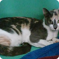 Adopt A Pet :: Callie - Franklin, NH