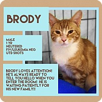 Adopt A Pet :: Brody - CLEVELAND, OH
