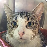 Adopt A Pet :: Antonia - Lafayette, NJ