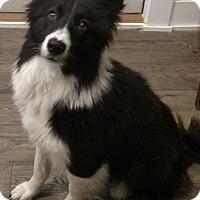 Adopt A Pet :: Ellie - Muskegon, MI